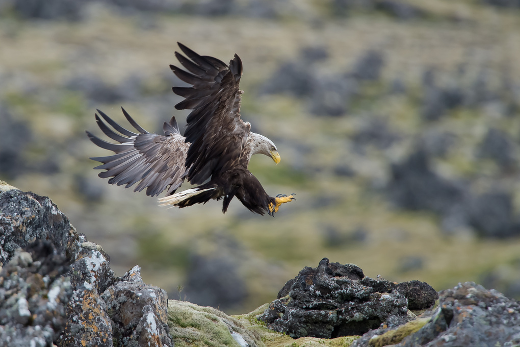The eagle is landing by Einar Gudmann