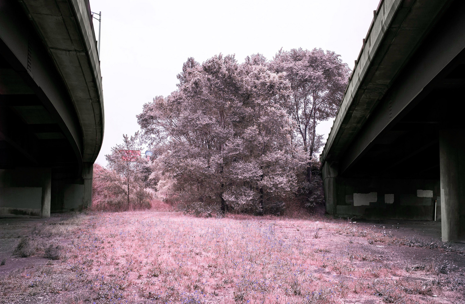 Between 2 bridges. by Ian Pettigrew