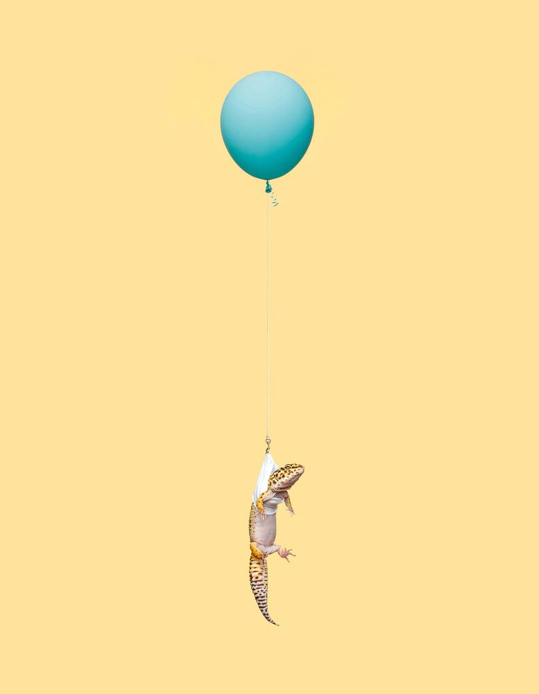 gecko-2 by Ian Pettigrew
