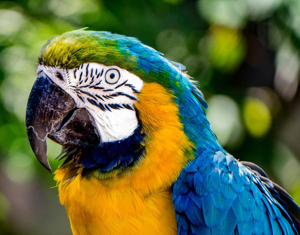 Macaw by Steven Gotz