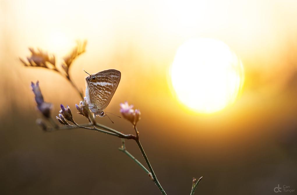 Sun Beauty by Can Tunçer