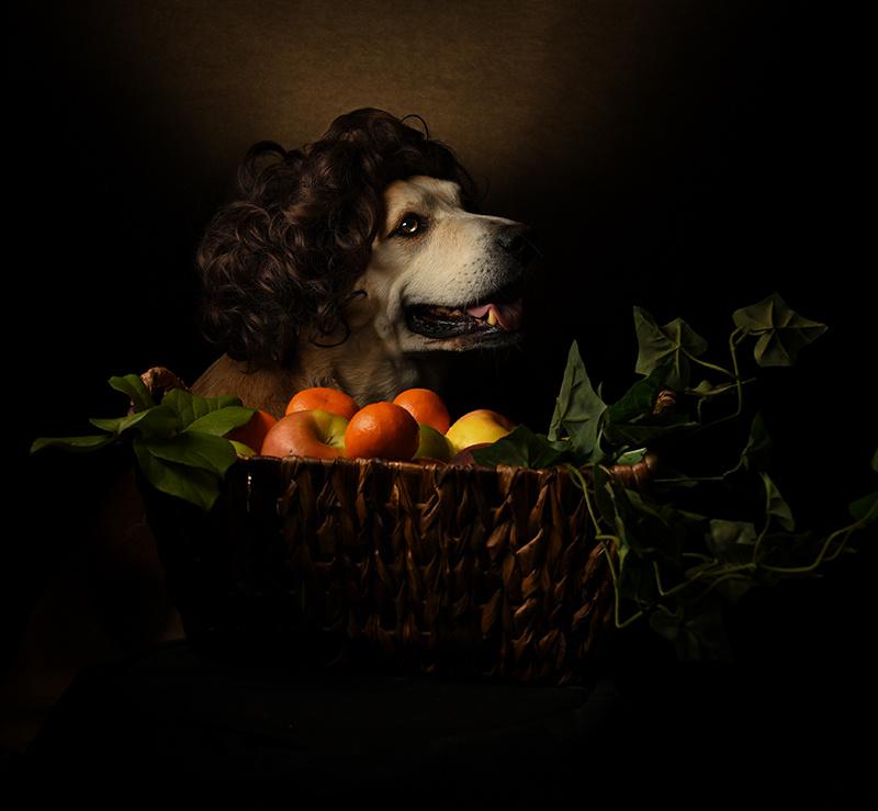 Dog With Fruit by Douglas Turney