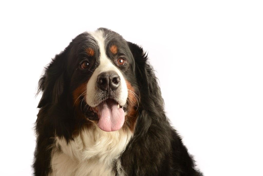 Fenway the Dog by Douglas Turney