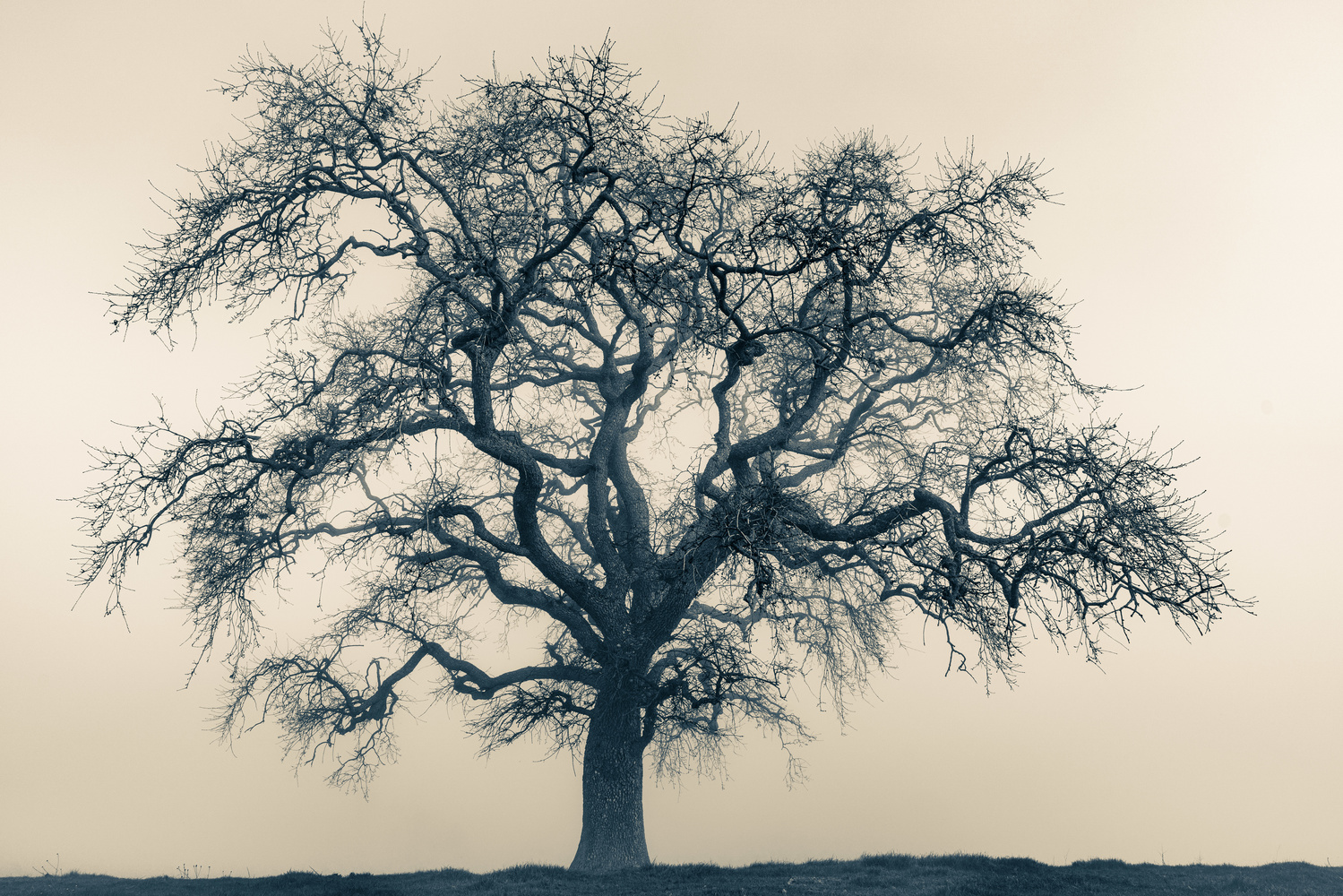 Tree by Robert Parker