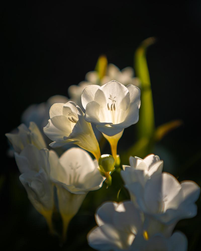 Flower by Robert Parker