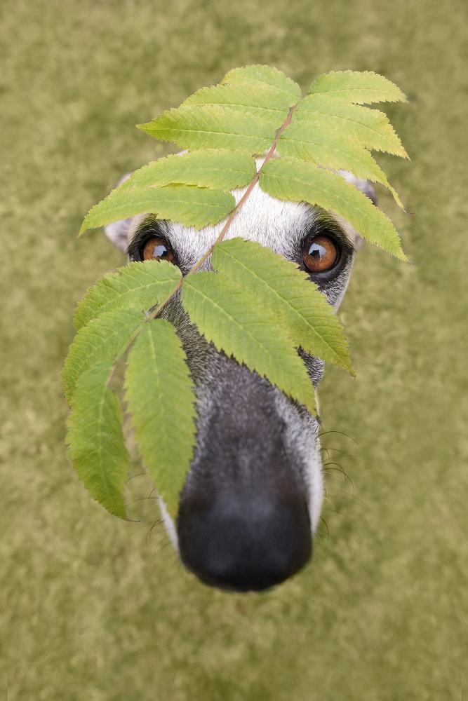 Camo dog by Elke Vogelsang