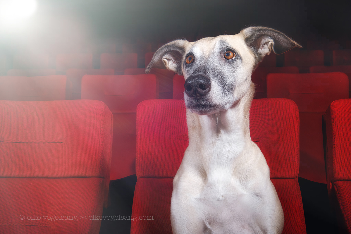 Let's go to the movies by Elke Vogelsang