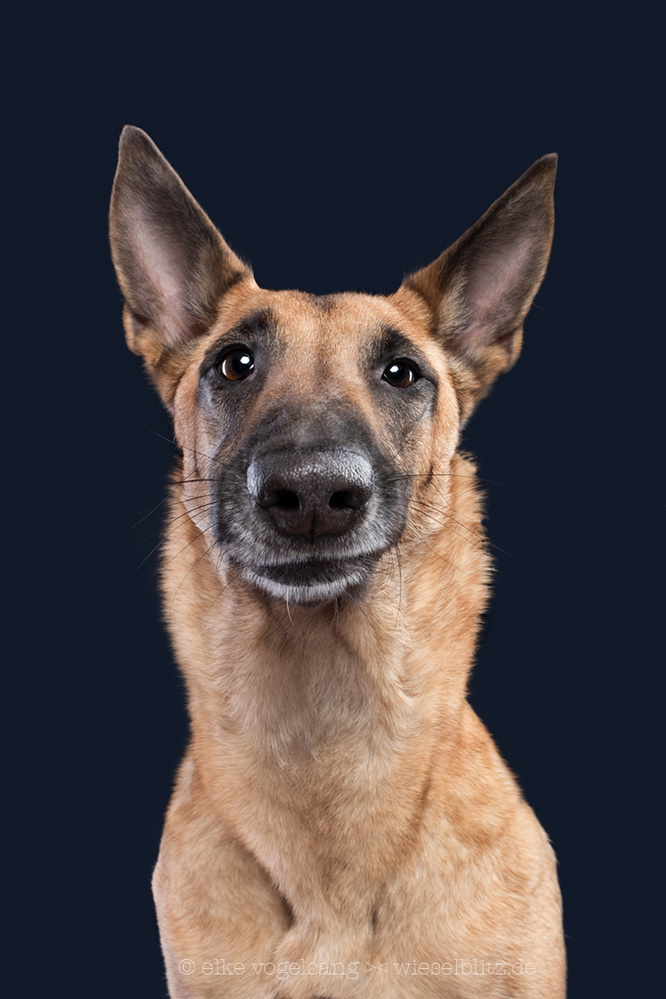 She knows I'm just an imposter by Elke Vogelsang