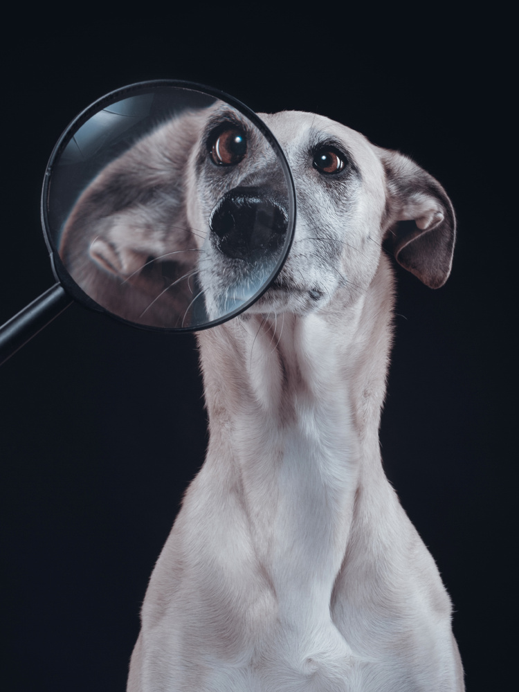 Say No to Photoshop! by Elke Vogelsang