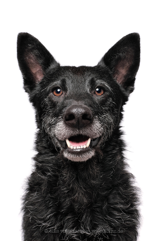 Good boy Kenjo by Elke Vogelsang