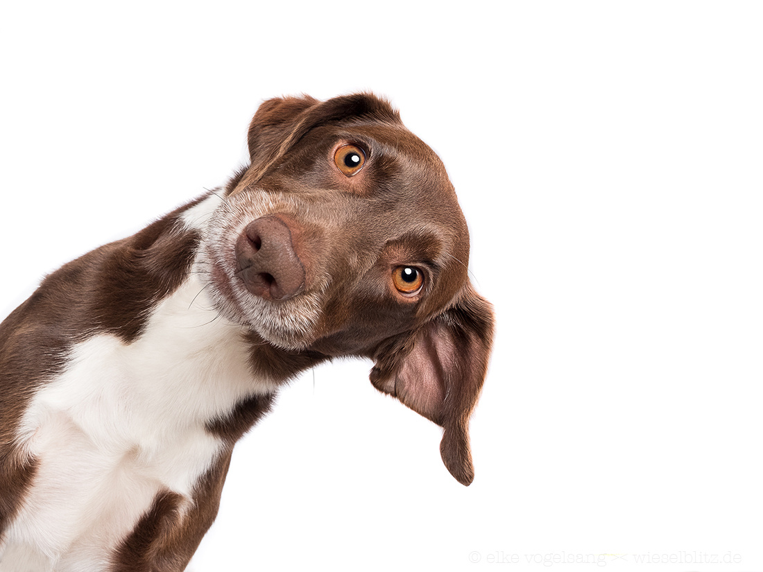 Anybody in? by Elke Vogelsang