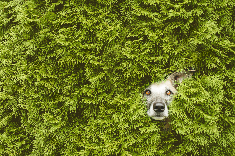 Hedge troll by Elke Vogelsang