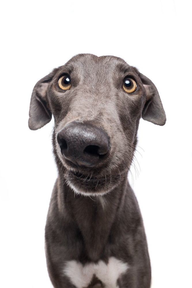 Bewildered grey by Elke Vogelsang