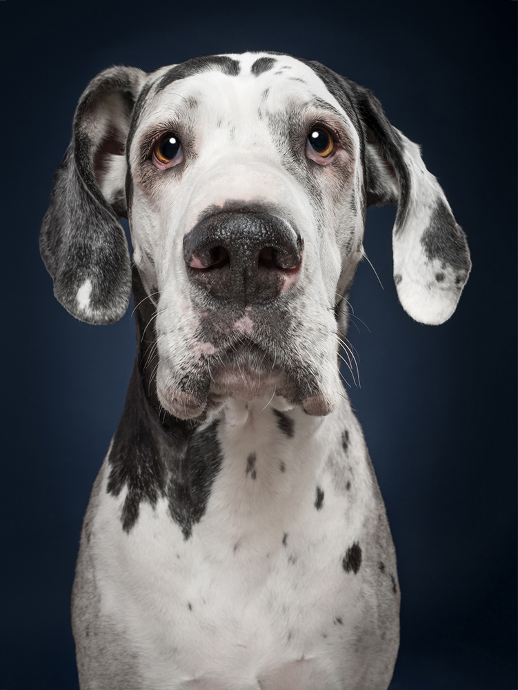 The look of disappointment when she smells another bitch on you by Elke Vogelsang