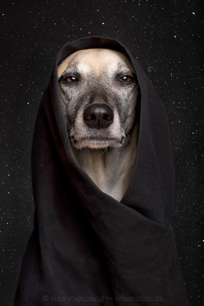 """Don't underestimate the dark side of the Force."" by Elke Vogelsang"