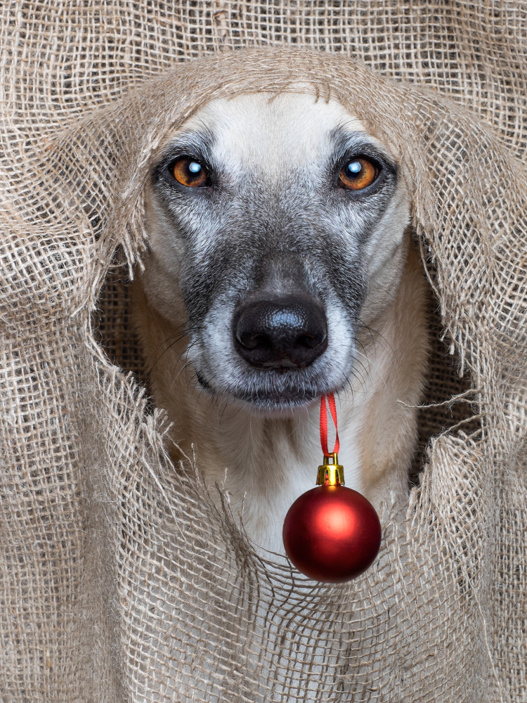 Happy Christmas by Elke Vogelsang