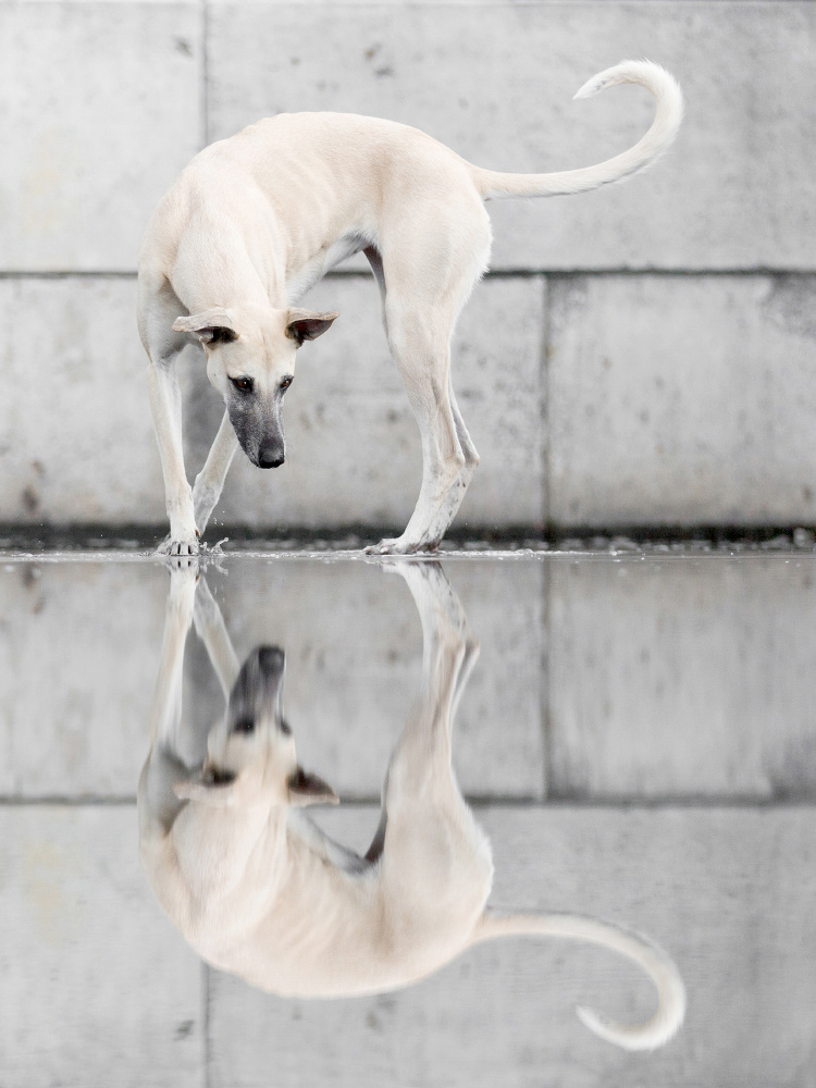 Harbour reflections by Elke Vogelsang