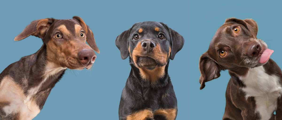 Three cuties by Elke Vogelsang