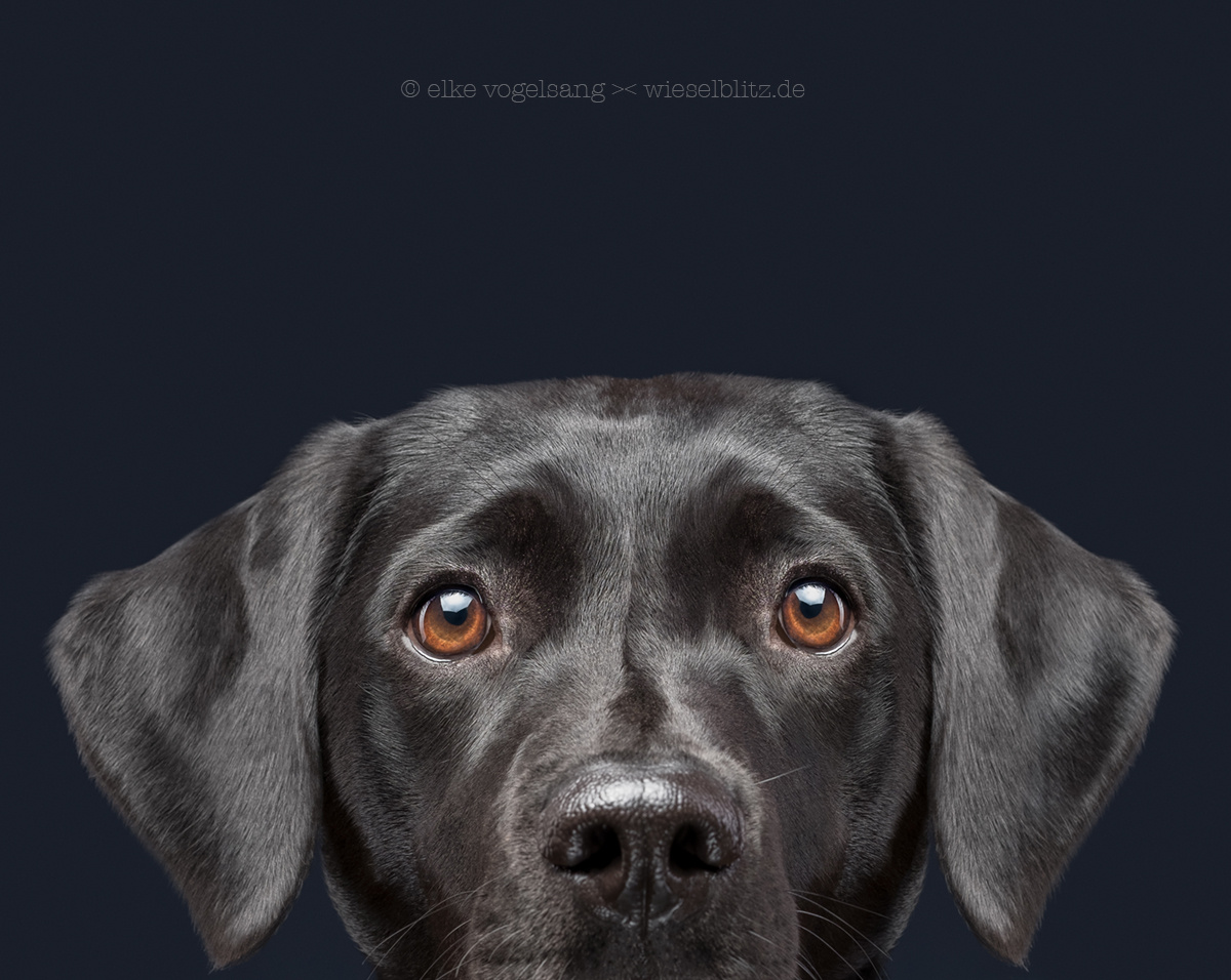 They have breakfast ... without me by Elke Vogelsang