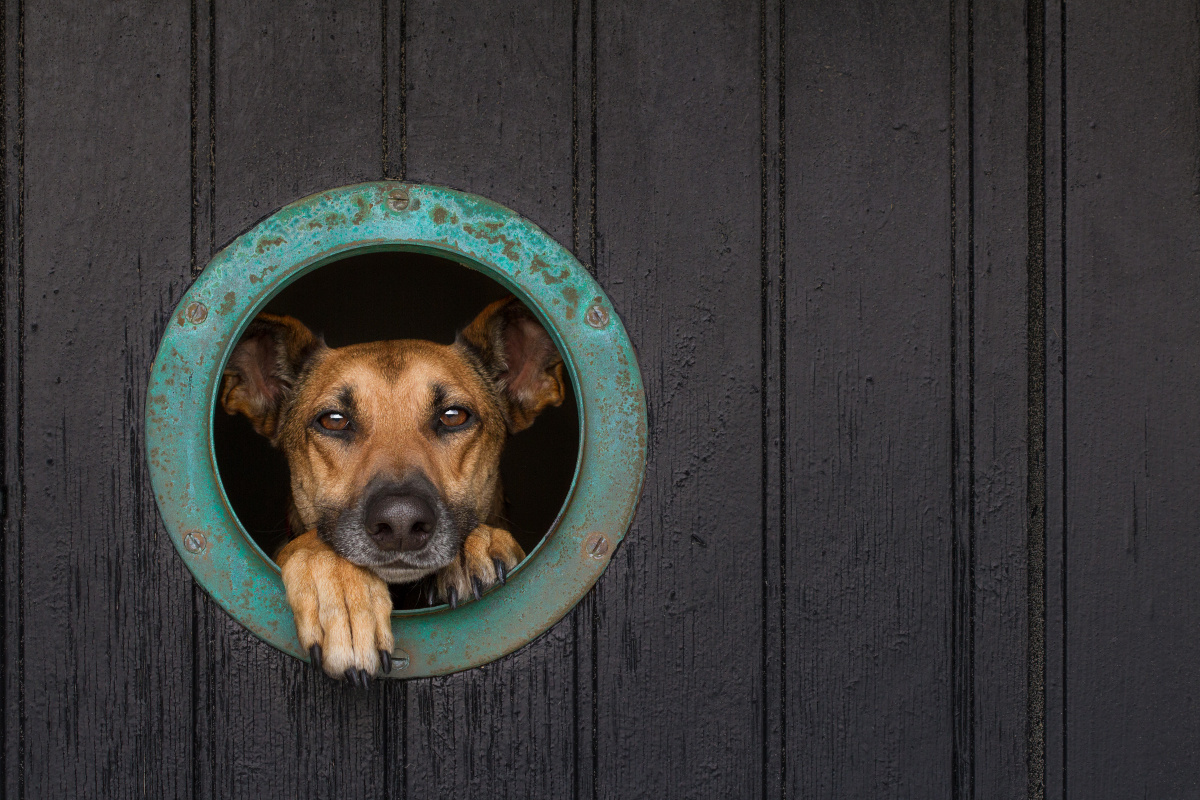 Bull's eye by Elke Vogelsang