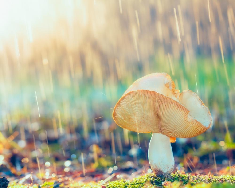 Rain on a Toad Stool by Steve Stephenson