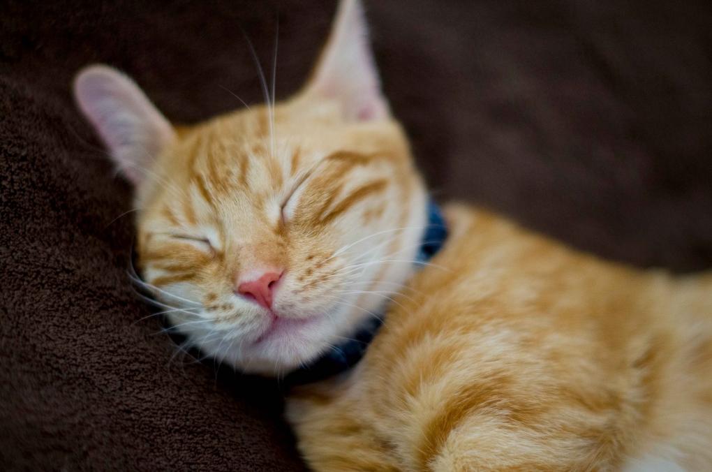 Orange Cat by Amy Kubik