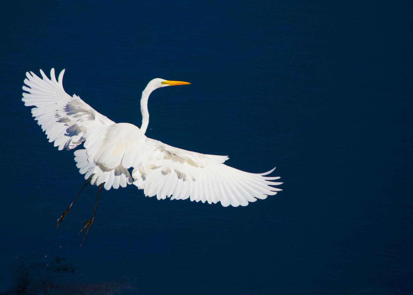 In Flight by J Sclafani