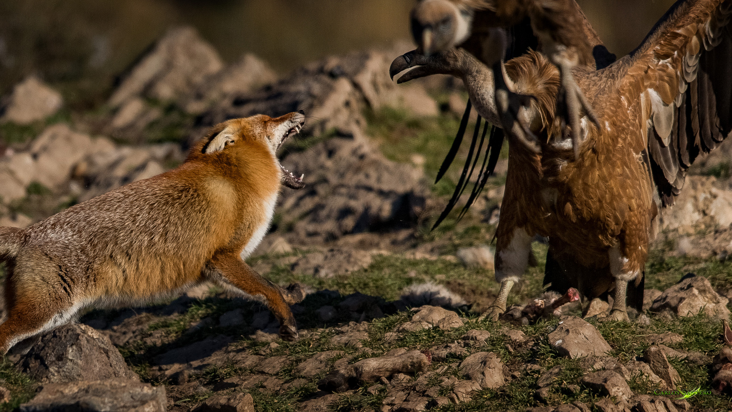 The Fight by Carlos Santero