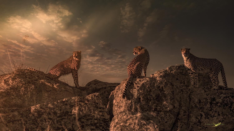 Tres Cheetas by Carlos Santero