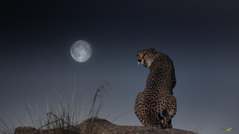 The Cheetah and the Moon by Carlos Santero