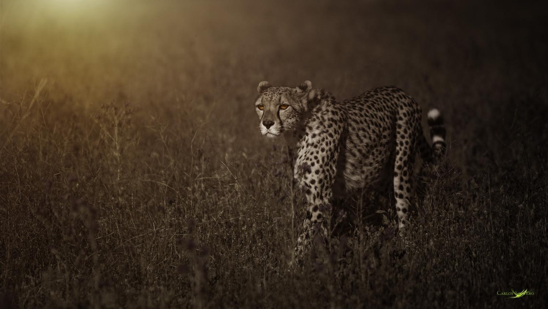Into the light by Carlos Santero