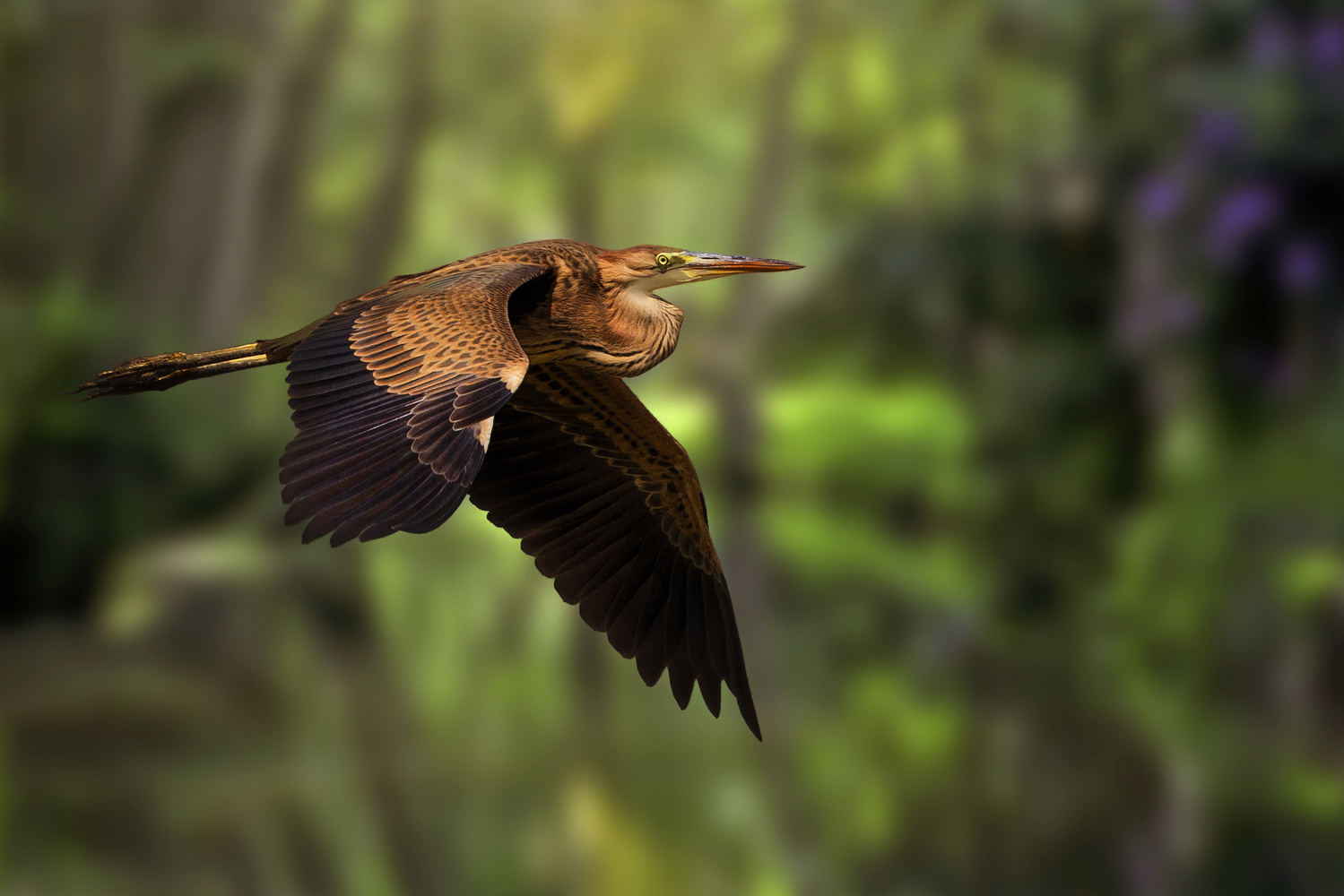 Purple Heron by Carlos Santero