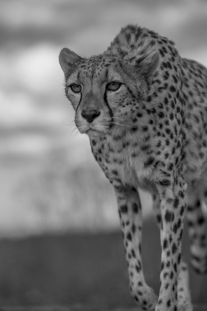 Hunting by Carlos Santero