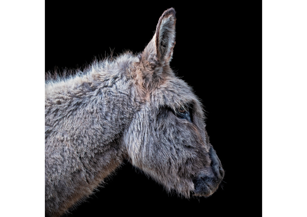 Donkey by Ben O'Connell