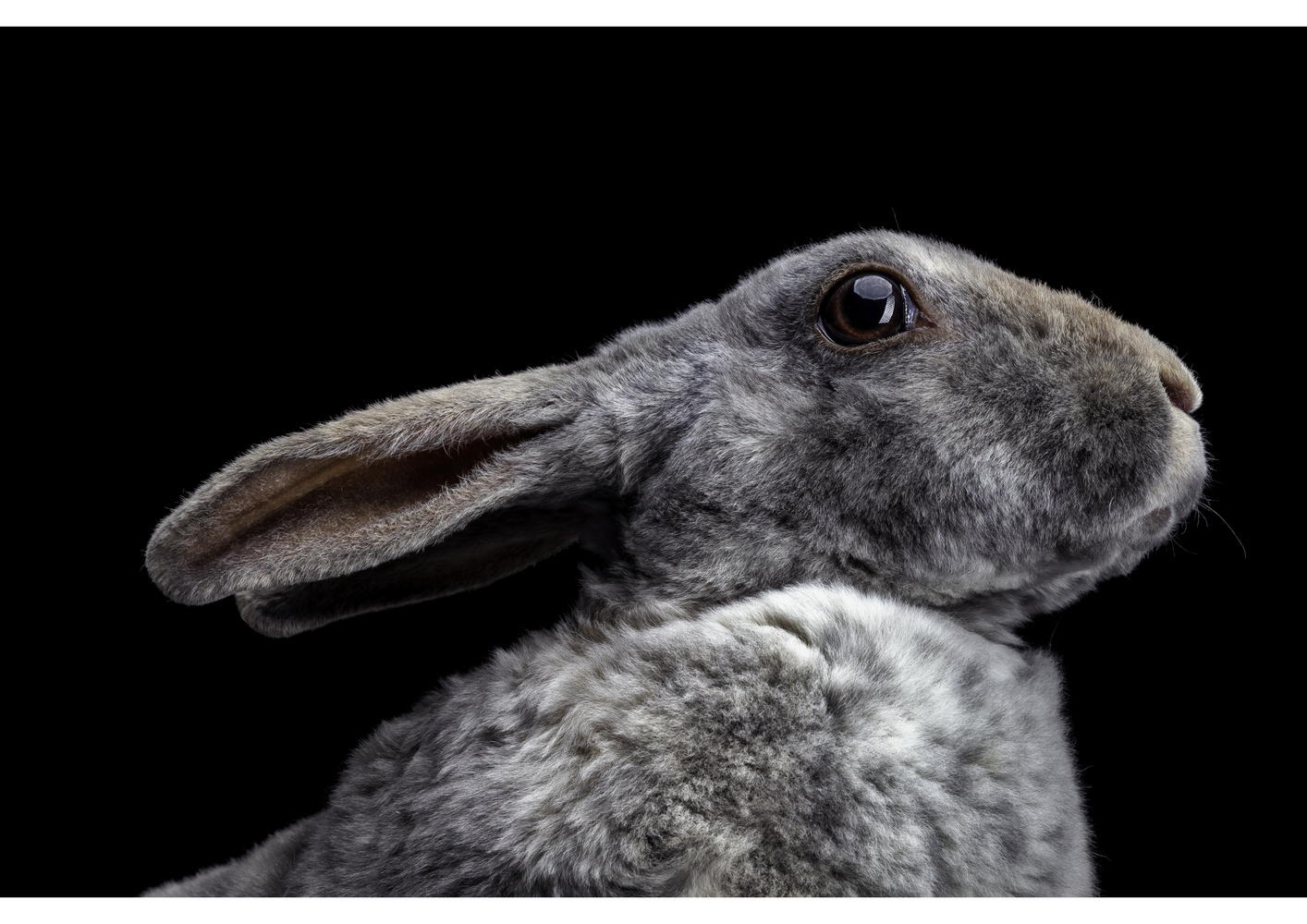 Rabbit 3 by Ben O'Connell