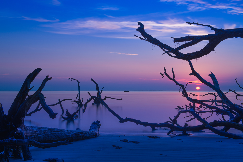Big Talbot Island by Wayne Denny