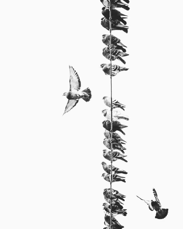 The Flock  by Martin Van Londen
