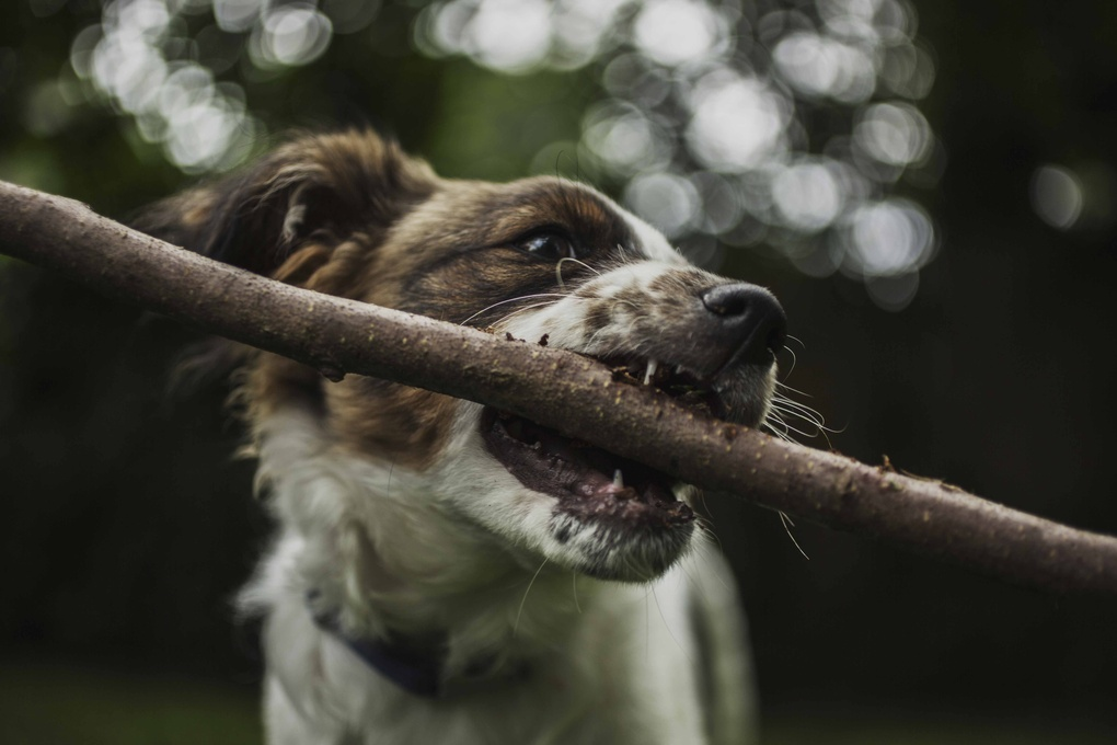 A Dog and His Stick  by Martin Van Londen
