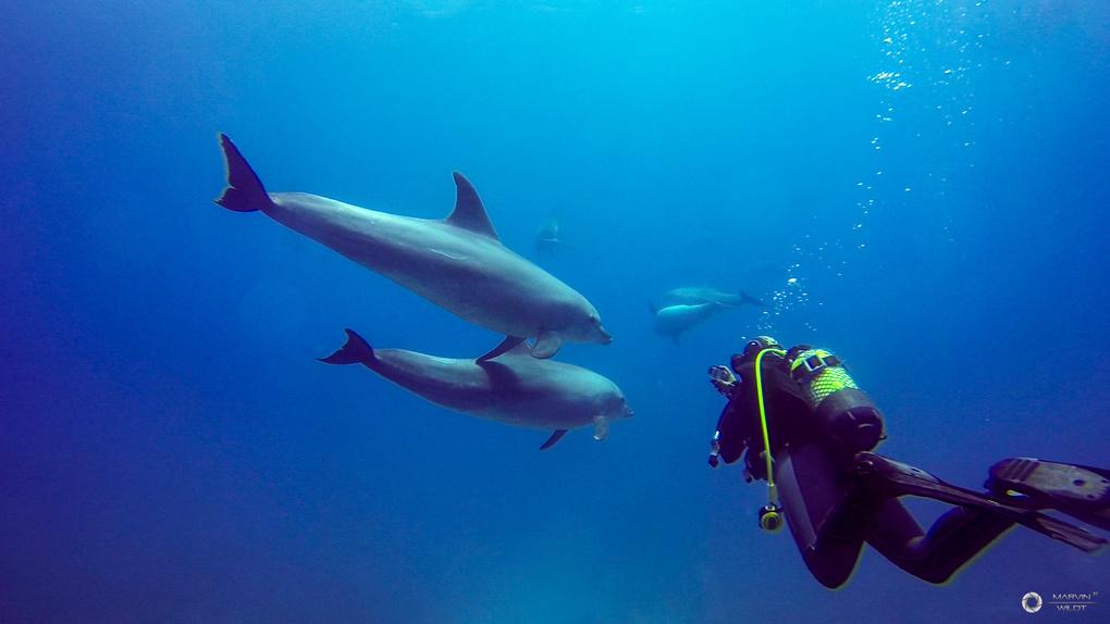 Pleasure Diving by Marvin Wildt