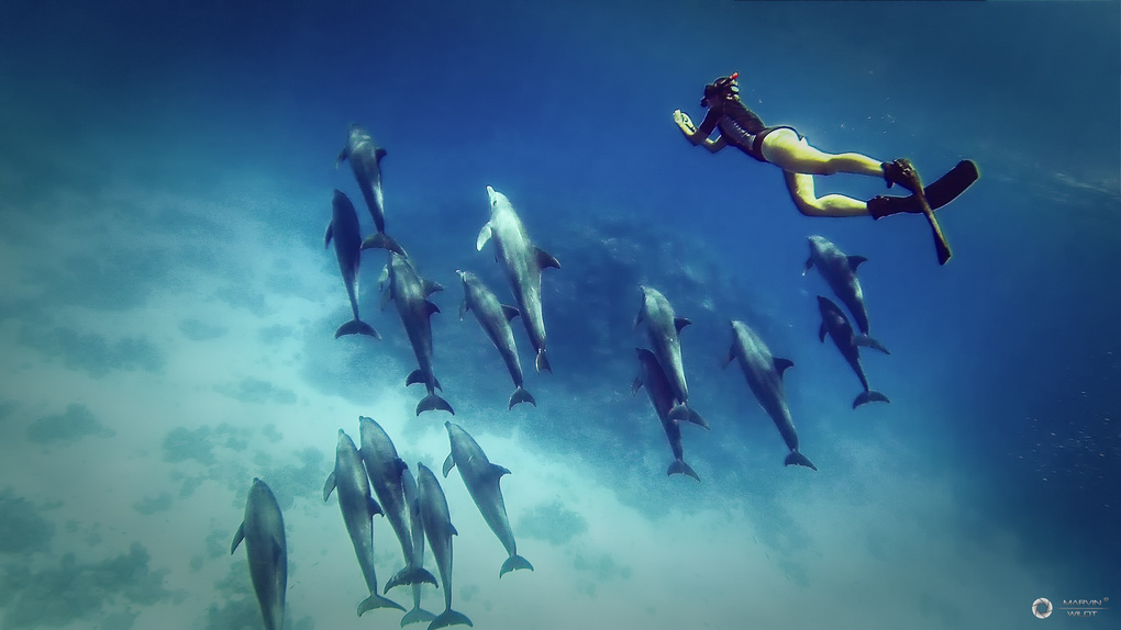 Dolphin Day by Marvin Wildt