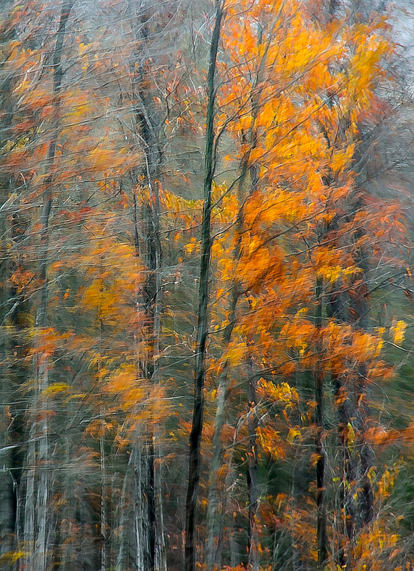 Autumn FIre by Judi Smelko