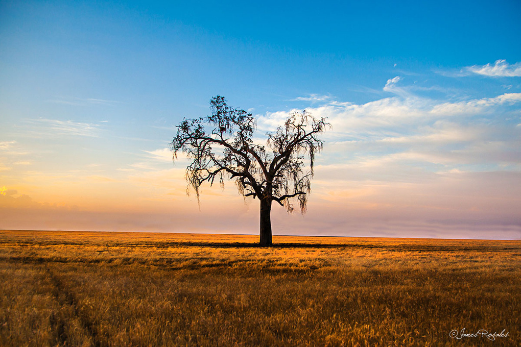 Lonely Tree by James Rosales