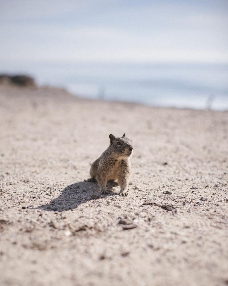 Mr Squirrel by Julien Jarry