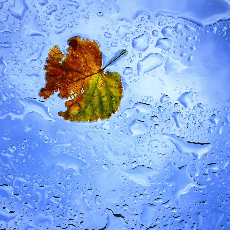 Leaf by Alun Carr