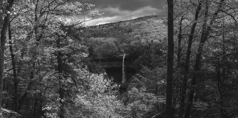 Forest Views by Cody Schultz