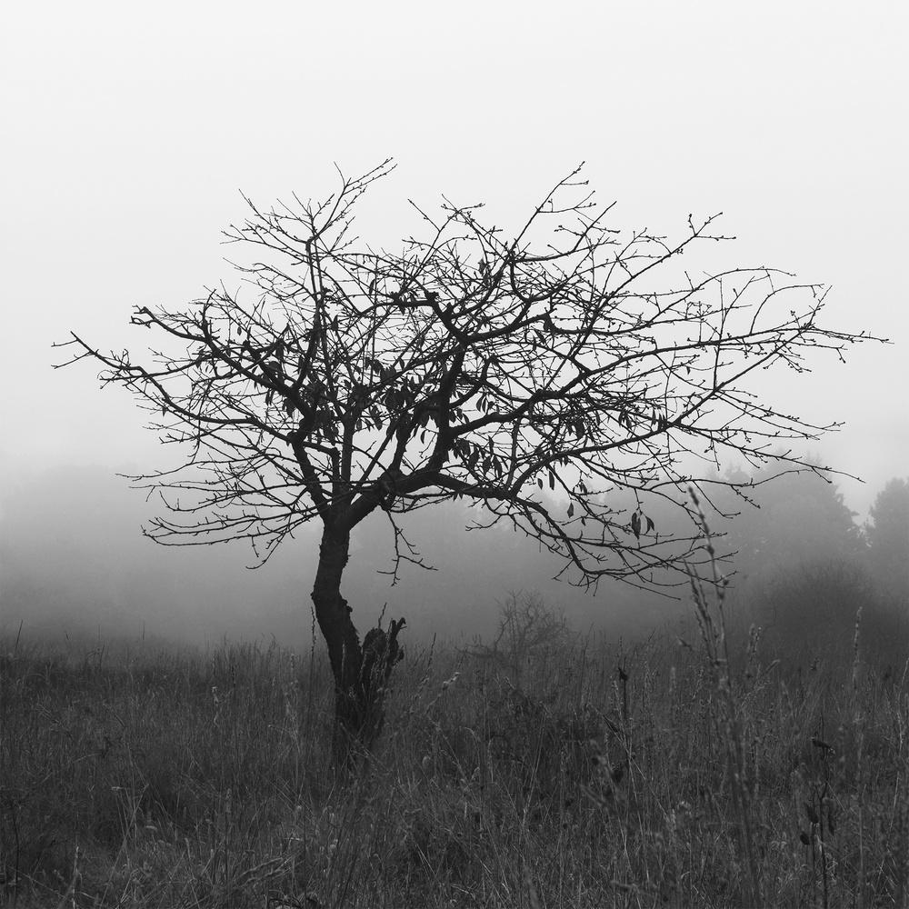 | decay | by Cody Schultz