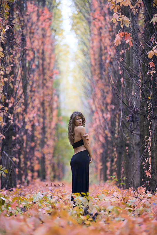 Beautyfull Fall by Andor Keves