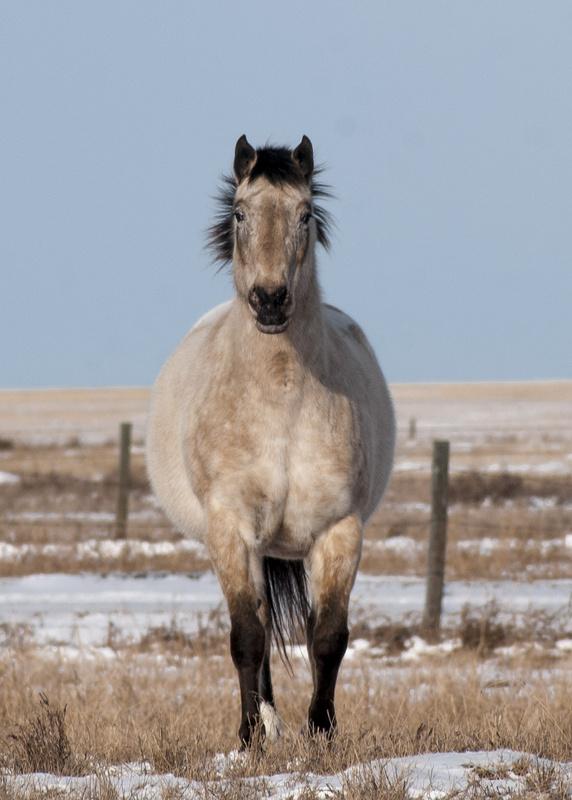 Horse Staring by John Berger