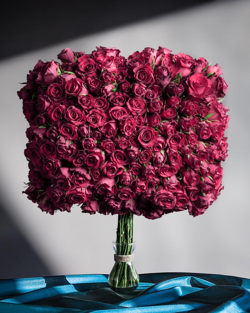 Roses by Ewan Paton