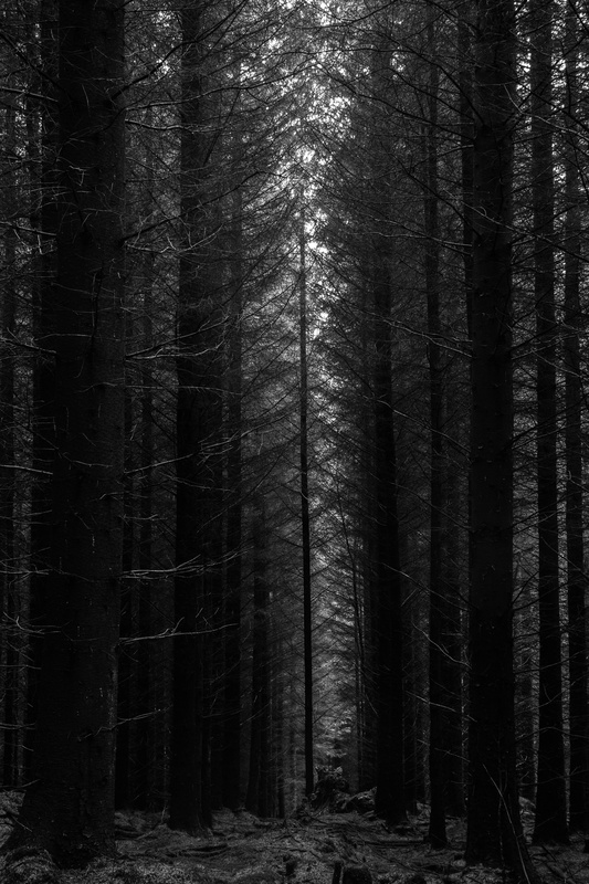 Alone by Daniel Jeavons